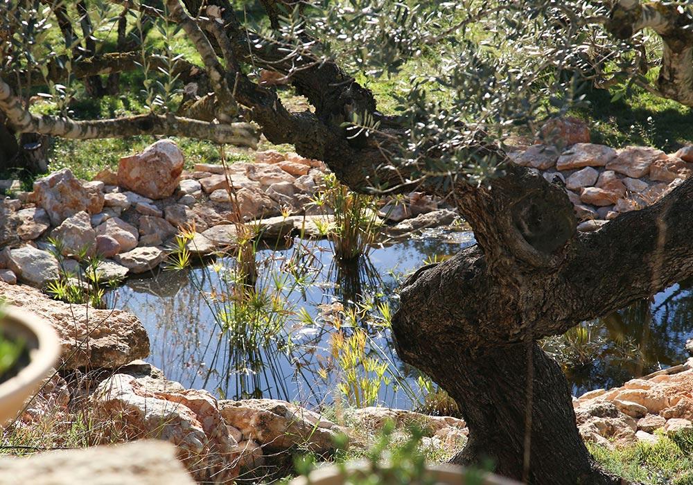 Jardines del Ecoturismo rural Villafeliche