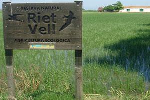 Actividades en el Delta del Ebro